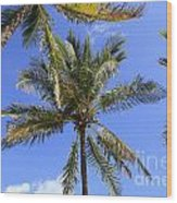 Cocoanut Palm Trees Sky Background Wood Print