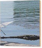 Crocodile In Cancun Wood Print