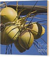 Coconut 1 Wood Print