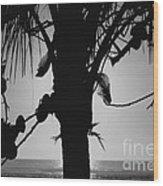 Coconut Palm - Cocotier - Ile De La Reunion - Reunion Island Wood Print by Francoise Leandre