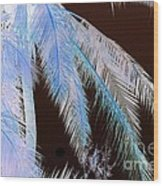 Coconut Palm - Reunion Island - Indian Ocean Wood Print