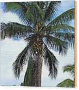 Coconut Palm Tree Wood Print