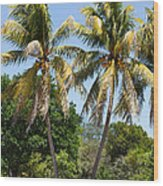 Coconut Palm Trees In Key West Wood Print