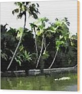 Coconut Trees And Others Plants In A Creek Wood Print