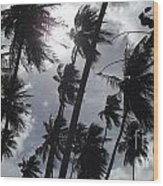 Coconut Trees In Barbados Wood Print