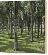 Coconuts Trees In A Row Wood Print by Sami Sarkis