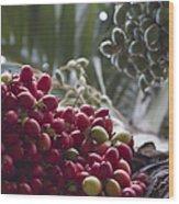 Cocos Nucifera - Niu Mikihilina - Palma - Niu - Arecaceae -  Palmae Wood Print