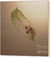 Coffee Beans On Coffea Arabica Leaf Wood Print