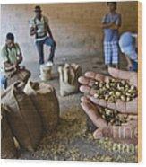 Coffee Beans Santo Domingo Wood Print