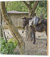 Coffee Country Dominican Republic Wood Print