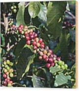 Coffee Farming. Northern Thailand Wood Print