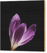 Colchicum #2 Wood Print