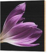 Colchicum #4 Wood Print