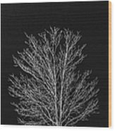 Cold And Lonely Wood Print