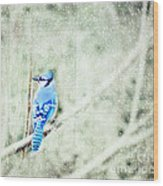 Cold Day For A Blue Jay Wood Print