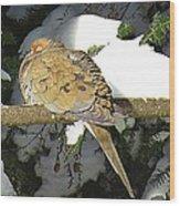 Cold Dove Wood Print