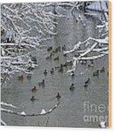 Cold Ducks Wood Print