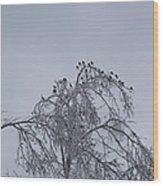 Cold Landing  Wood Print