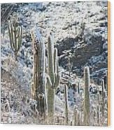 Cold Saguaros Wood Print