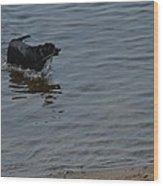 Cold Water Fetch Wood Print