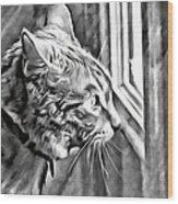 Cole Kitty Watchful Wood Print