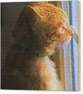 Colekitty On The Lookout Wood Print