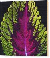Coleus Leaf Wood Print