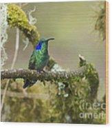 Colibri Thalassinus... Wood Print