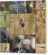 Collage Marsh Life Wood Print