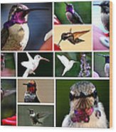 Collage Of Hummers 2 Wood Print