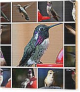 Collage Of Hummers Wood Print