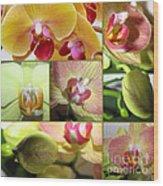 Collage Orchids 01yellow Green - Elena Yakubovich Wood Print