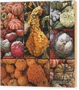 Collage - Pumpkins - Gourds - Elena Yakubovich Wood Print