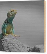 Collard Lizard Wood Print by Old Pueblo Photography
