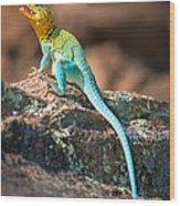 Collared Lizard Wood Print