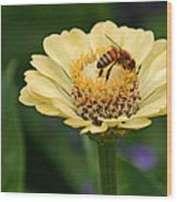 Collecting Nectar Wood Print