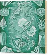 Collection Of Teleostei Wood Print by Ernst Haeckel