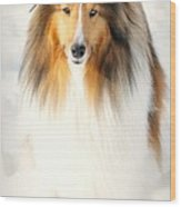 Collie  Wood Print by Diana Angstadt