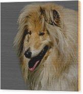 Collie Dog Wood Print