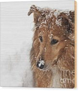 Collie In The Snow Wood Print