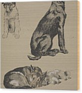 Collie, Retriever, Alstian And Keeshund Wood Print