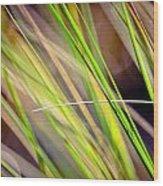 Collier-seminole Sp 13 Wood Print