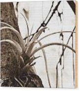 Collier-seminole Sp 18 Wood Print