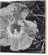 Collier-seminole Sp 22 Wood Print