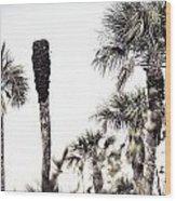 Collier-seminole Sp 24 Wood Print