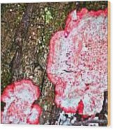 Collier-seminole Sp 31 Wood Print