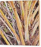 Collier-seminole Sp 32 Wood Print