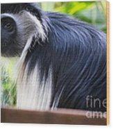 Colobus Monkey Wood Print