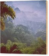 Colombia Forrest Wood Print