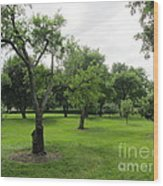 Colonial Apple Orchard Wood Print